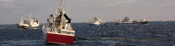 MSC Principles and Criteria for Sustainable Fishing